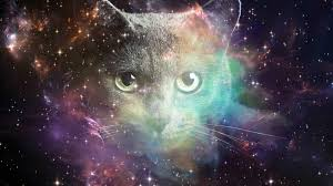 cat universe wallpaper animals image 4k background hd picture space cat hd wallpapers and