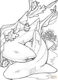bamboo sharks coloring page free printable coloring pages
