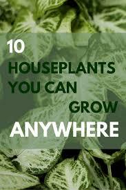 Indoor Gardening by 253 Best Indoor Gardening Bob Vila U0027s Picks Images On Pinterest