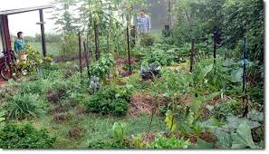 Permaculture Vegetable Garden Layout How To Establish A Small Space Intensive Food Garden The