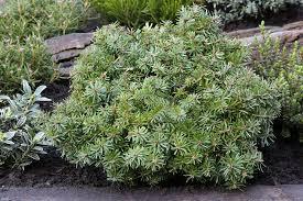 K He Im Internet Bestellen Große Gartenpflanzen Günstig Online Kaufen