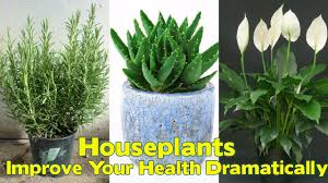 Most Fragrant Indoor Plants These 6 Houseplants In Your Bedroom Can Improve Your Health