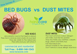 bed bug vs spider bite bed bugs vs dust mite