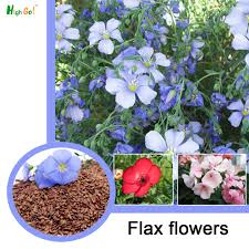 blue seed online get cheap blue flax seed aliexpress com alibaba group