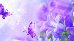 butterfly insects animals butterfly flowers download hd wallpaper