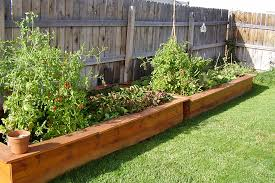 vegetables for home garden in the wooden raised bed garden on the