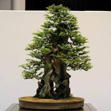 bonsai trees android apps on play