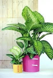unkomplizierte pflanzen plants and flowers