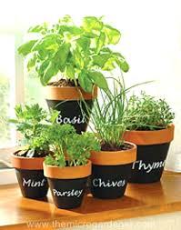 Grow Lights For Indoor Herb Garden - indoor herb garden ideas u2013 exhort me