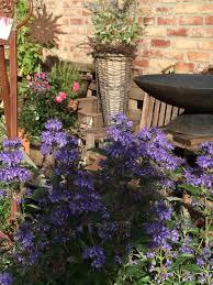 herbstbepflanzung balkon herbstbepflanzung für den balkon pflanzen