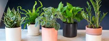indoor plants nz www palmers co nz wp content uploads bfi thumb hou