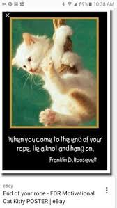 Hang In There Meme - image result for hang in there meme cats pinterest meme and cat