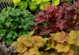 shade gardening organics pharo garden centre