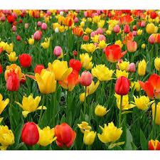 flowering plants at rs 50 taluka mulashi pune id