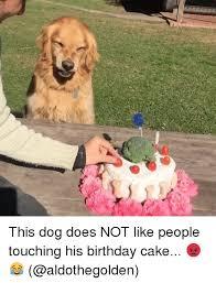 Birthday Cake Dog Meme - this dog does not like people touching his birthday cake