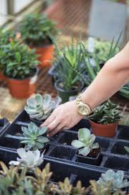 Home Decor Mom Blogs by Five Succulent Garden Ideas For Busy Moms U2013 Paradise Roads