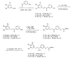 WO A1 Synthetic derivatives of rapamycin as multimerizing