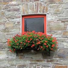What To Plant In Window Flower Boxes - pictures of window boxes and railing boxes