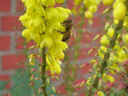 blooming plants these 8 winter blooming plants give bees needed nourishment