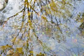 a reflection of trees and sky on small woodsy river autumn stock