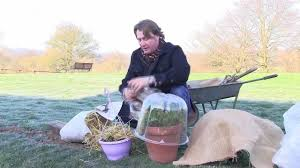 cover up your plants in winter part of hartman uk in the garden