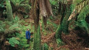 australia u0027s rainforests tourism australia