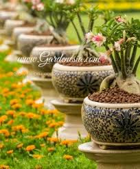 Types Of Garden Flowers - one stop station for all types of garden needs onlinegardenstore