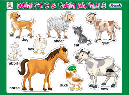 domestic animals for kids