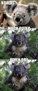 Koala Meme - wet koala way way scary don t you think 9gag
