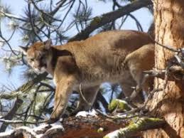 montana hunting trips with montana hunting fishing adventures