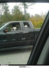 Dog Driving Meme - dogs in a car memey com