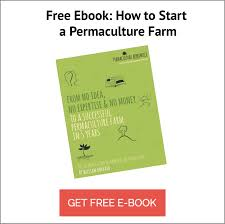 How To Draw A Topographic Map How To Design Your Property The Process Of Permaculture Design