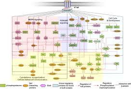 global phosphorylation analysis of β arrestin u2013mediated signaling