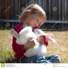 baby bunny stock images image 14130584
