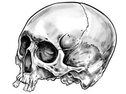 illustrate a screen printed skull t shirt from photo reference