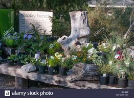 native plants victoria potted plant display kuranga native nursery at mt evelyn in the