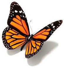 butterfly dievca
