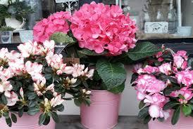 Wedding Flowers Essex Prices Wedding Flowers Funeral Flowers Essex Florist