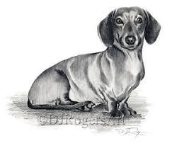 dachshund pencil drawing 8 x 10 dachshund art print signed by