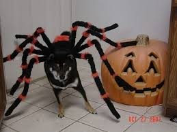 Dog Spider Halloween Costume Halloween Costume Gsd German Shepherd Dog Forums