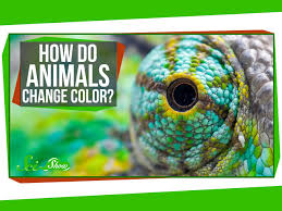 do animals change color youtube