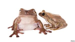 is the post dinosaur world the age of frogs failure to croak