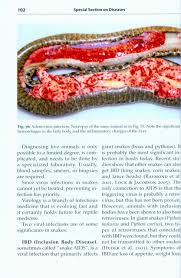 snake diseases preventing and recognizing illness frank