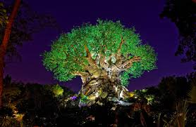 drones fly the tree of at disney s animal kingdom to