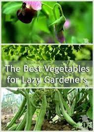 how to create an indoor vegetable garden indoor vegetable