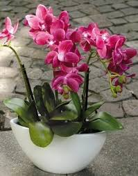 artificial orchids artificial orchid potted shaped vase pink secret garden