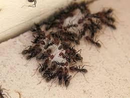 ants in bedroom home design ideas