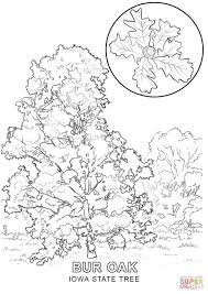 iowa state tree coloring page free printable coloring pages