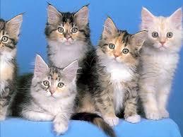 Misterios felinos