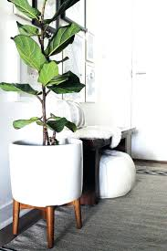 best house plants decorations 50 best indoor plants inspiration for apartements